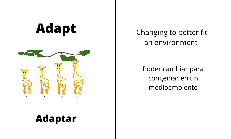 Adapt: Changing to better fit an environment. Adaptar: Poder cambiar para congeniar en un medioambiente.