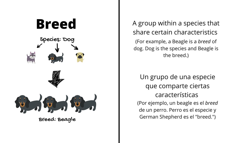 """Breed: A group within a species that share certain characteristics. (For example, a Beagle is a breed of dog. Dog is the species and Beagle is the breed.) Un grupo de una especie que comparte ciertas características. (Por ejemplo, un beagle es el breed de un perro. Perro es el especie y German Shepherd es el """"breed."""")"""
