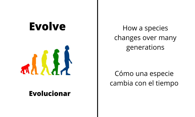 Evolve: How a species changes over many generations. Evolucionar: Cómo una especie cambia con el tiempo