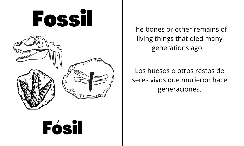 Fossil: The bones or other remains of living things that died many generations ago. Fósil: Los huesos o otros restos de seres vivos que murieron hace generaciones.
