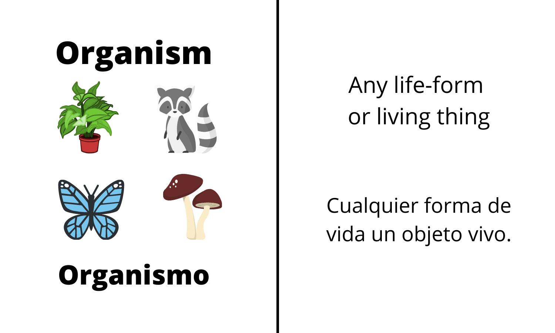 Organism: Any life-form or living thing. Organismo: Cualquier forma de vida un objeto vivo.
