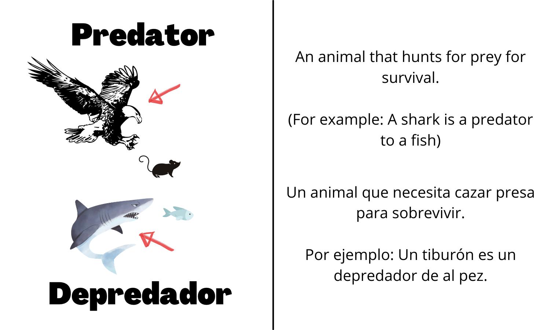 Predator: An animal that hunts for prey for survival. (For example: A shark is a predator to a fish). Depredador: Un animal que necesita cazar presa para sobrevivir. (Por ejemplo: Un tiburón es un depredador de al pez.