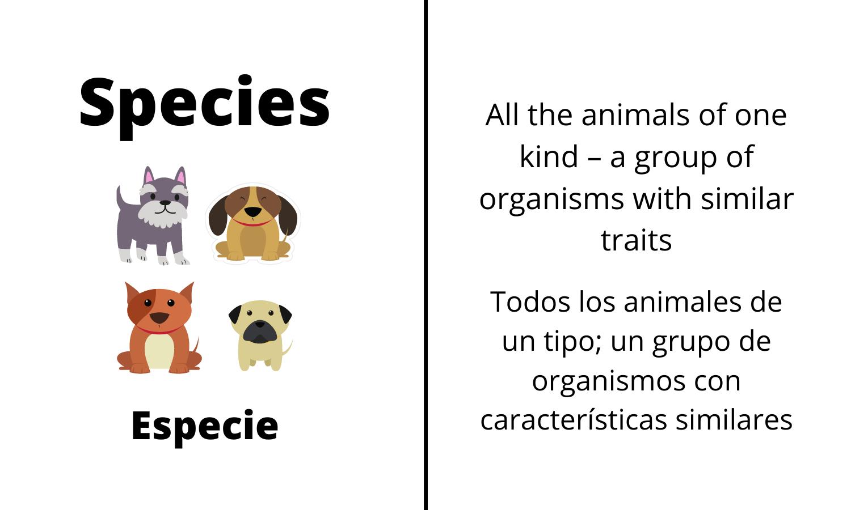 Species: All the animals of one kind-a group of organisms with similar traits. Especie: Todos los animales de un tipo; un groupo de organismos con características similares